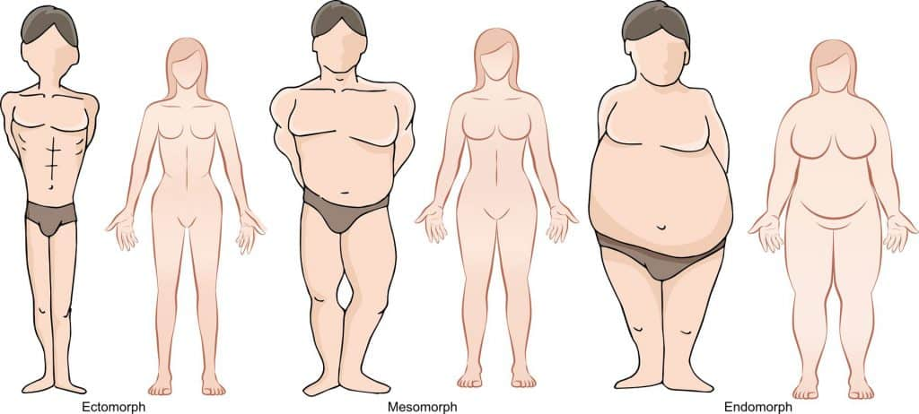 Ectomorph, mesomorph, and endomorph bode types